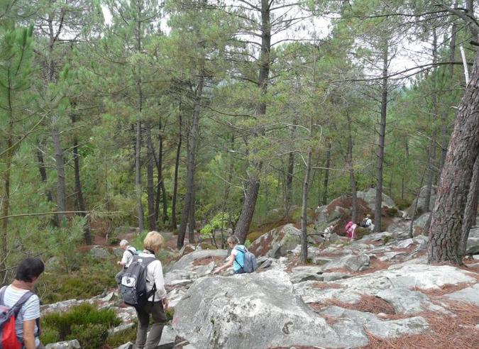 Le sentier Robert Louis Stevenson en forêt de Fontainebleau