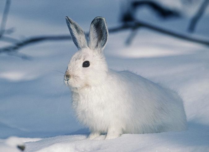 Protégeons la faune de montagne en hiver