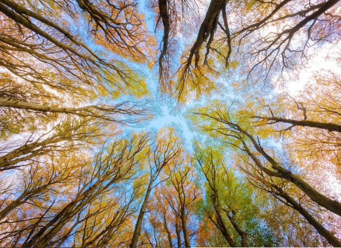 Journée internationale des forêts le 21 mars