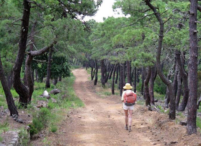 La forêt, un refuge en cas d'épidémie ?