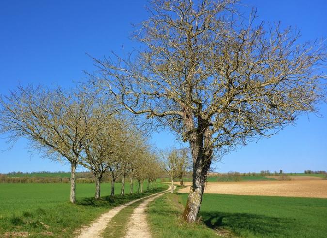 Préserver les chemins ruraux : les associations mobilisées dans l'Allier