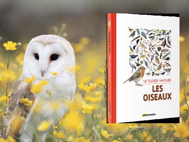 Guide nature : Les oiseaux