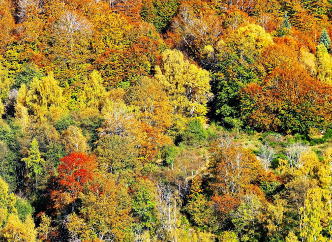 10 forêts exceptionnelles à découvrir cet été