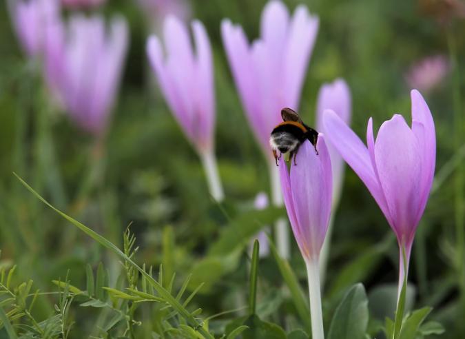 Plantes toxiques et plantes comestibles : attention aux confusions !