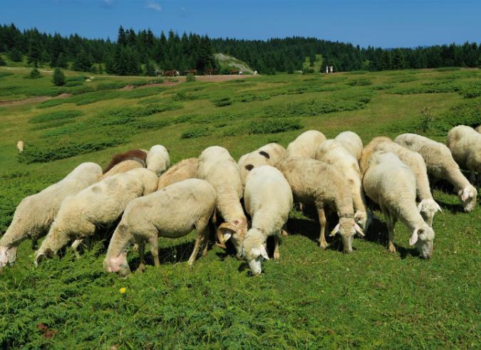 Une nouvelle signalétique pastorale dans le Vercors